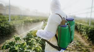 Agrotóxico mais usado no Brasil é associado a câncer linfático