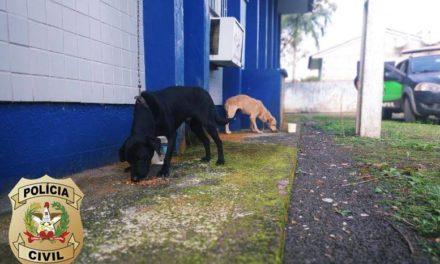 Polícia Civil resgata cães maltratados