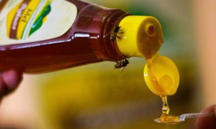 Entenda os motivos que fazem o mel catarinense um dos melhores do mundo