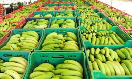 Política de Defesa Sanitária Vegetal deve trazer mais competitividade à produção catarinense