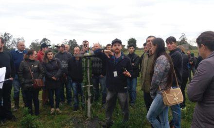 Dia de campo sobre pitaia atrai mais de 100 produtores