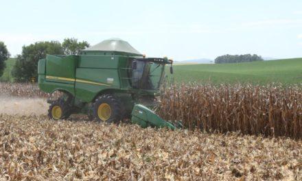 Secretaria de Agricultura quer ampliar produção de milho no Sul do Estado