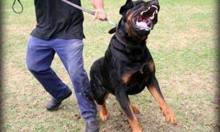 Cão rottweiler mata bebê de um ano e três meses em Sapiranga/RS