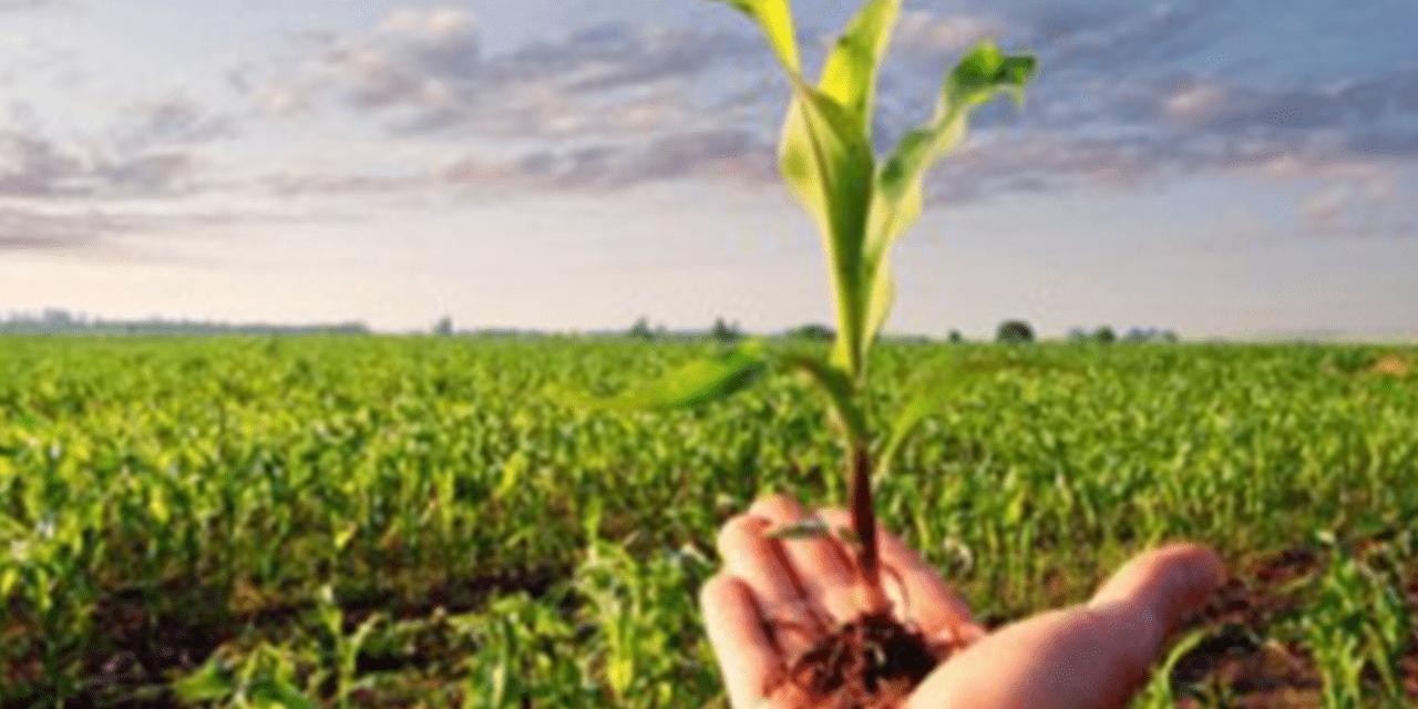 Projeto cria linha de crédito para filho de agricultor familiar comprar terra