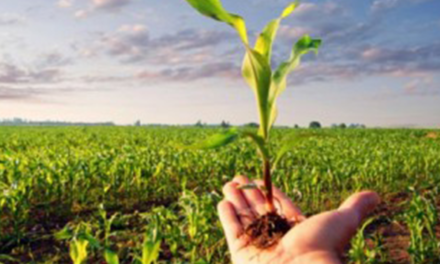 Ministério da Agricultura prorroga prazo de validade da DAP