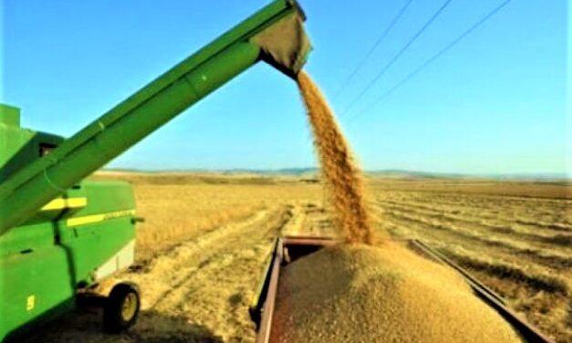 Custo de produção por saca de arroz na safra 2019/20 está 10,52% maior