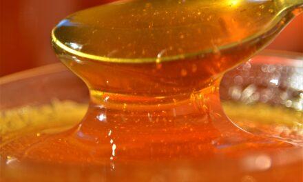 Conheça as variedades e benefícios do mel produzido em Santa Catarina
