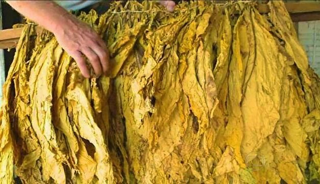 Exportações de tabaco podem cair 6%
