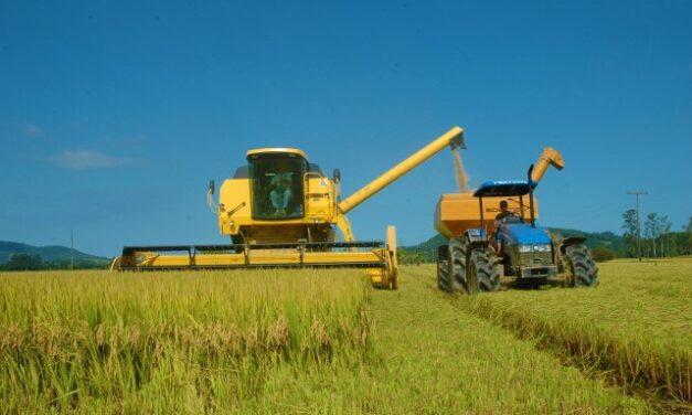 Extremo Sul Catarinense é a região líder em produção de arroz em SC