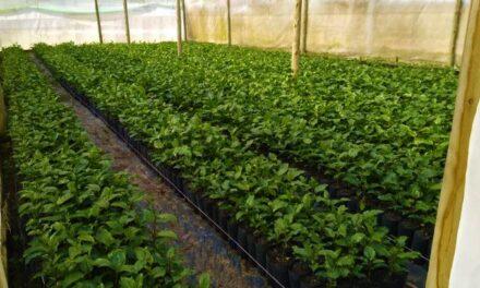 Epagri oferece curso gratuito sobre produção de mudas de maracujá