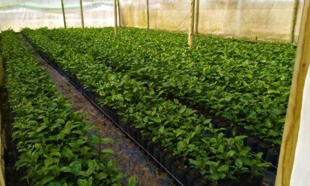 Após 30 dias de vazio sanitário, plantio de maracujá está autorizado em SC