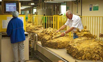 Entidades e empresas iniciam negociação do preço do tabaco
