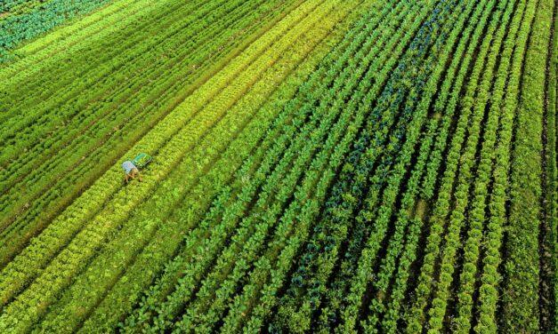 Governo do Estado investe R$ 77,4 milhões em programas de fomento agropecuário