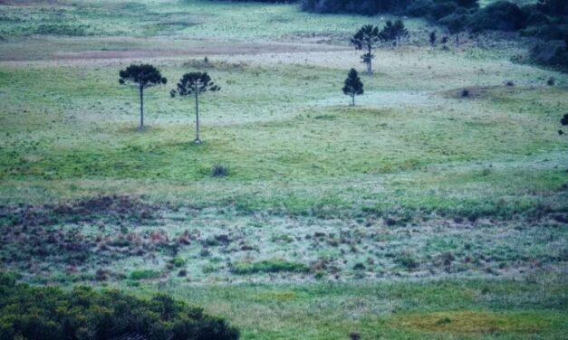 Santa Catarina registra primeira geada de 2021