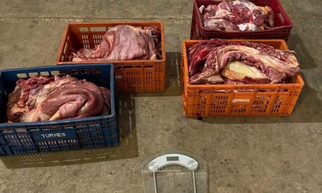 Mais de 500 quilos de carne de cavalo apreendidos em Morro da Fumaça